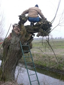 de ladder en dan (foto Henk Dubbeldam)