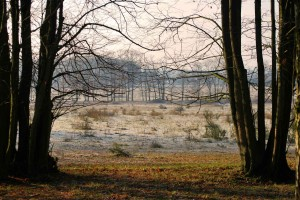 plantage-willem-iii-elst-u-288379